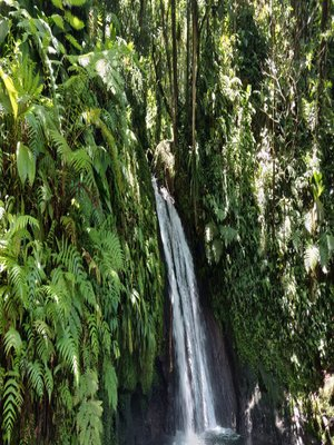 Guadeloupe forêts cascades riviere